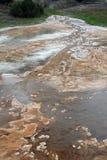 Травянистая весна, мамонтовые весны, Йеллоустон стоковое фото