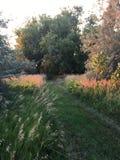 травянистая дорога Стоковые Изображения