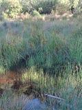 Травянистая лагуна стоковые фотографии rf