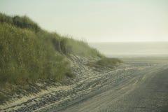 Травянистая песчанная дюна на пляже Стоковое Изображение RF