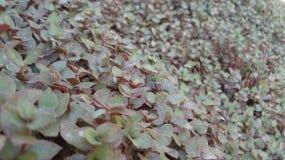 Травянистая стена Стоковые Фотографии RF