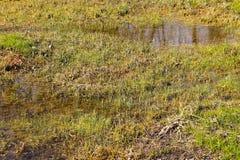 Травянистая топь с стоячей водой Стоковое Изображение RF
