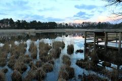 травянистое озеро Стоковая Фотография