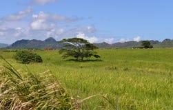 Травянистое поле на Кауаи, Гаваи Стоковые Изображения