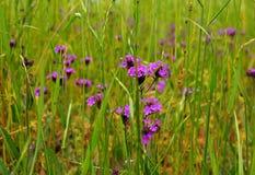 Травянистое поле Стоковые Фотографии RF