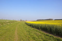 Травянистое bridleway в весеннем времени Стоковые Изображения RF