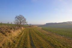 Травянистое bridleway в зиме Стоковое фото RF