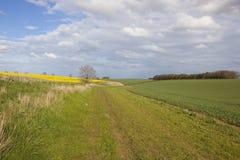 Травянистое bridleway с пшеницей и канола урожаями Стоковое Изображение
