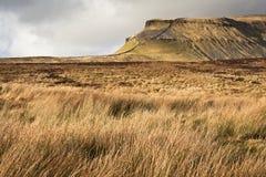 Травянисто причаливает ведение к Ручка-y-Генту в участках земли Yorkshire национальных стоковое изображение rf