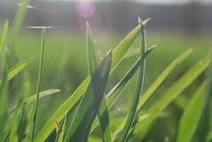 травянисто стоковая фотография