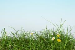 травянисто стоковое изображение