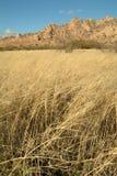 травянистые горы лужка Стоковое Изображение RF