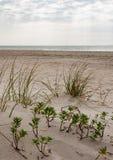 Травянистые песчанные дюны на пляже стоковые изображения
