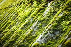 Травянистые rooftiles покрытые с мхом Стоковые Фото
