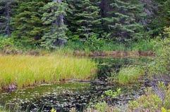 Травянистый болото стоковые изображения rf