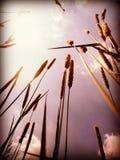 Травянистый взгляд Стоковые Фото