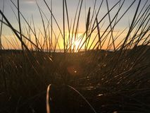 травянистый заход солнца Стоковая Фотография RF