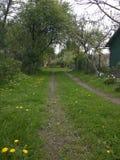 Травянистый путь! стоковая фотография rf