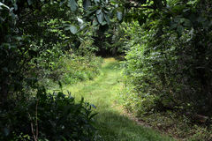 травянистый путь стоковое фото rf