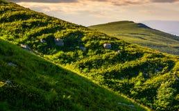 Травянистый луг на наклоне горы Стоковые Фотографии RF