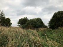 Травянистый холм осени стоковое изображение rf