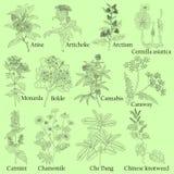 травяной Иллюстрация заводы в векторе с цветком для пользы Иллюстрация штока