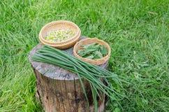 Травяной лук комплекта и сада зеленый на пне внешнем Стоковая Фотография RF