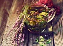 Травяной чай в прозрачной стеклянной кружке и травах леса Стоковые Изображения RF