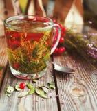 Травяной чай в прозрачной стеклянной кружке и травах леса Стоковое Изображение