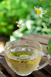 Травяной чай в саде Стоковые Фото