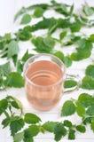 Травяной чай в стекле Стоковые Изображения RF