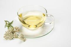 Травяной чай в стеклянной чашке стоковое фото rf