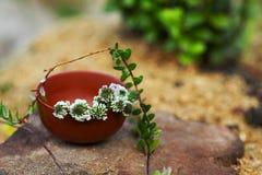 Травяной чай с белым клевером и клюква разветвляют Стоковая Фотография