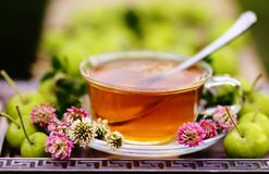 Травяной чай с клевером и зелеными яблоками Стоковая Фотография RF