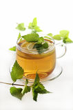 травяной чай Стоковые Фотографии RF