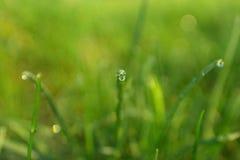 Трав-лезвия с падениями росы утра Стоковые Фотографии RF