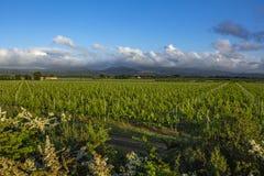 Традиционная сельская местность и ландшафты красивой Тосканы Виноградники в Италии Виноградники Тосканы, винодельческого региона  стоковое изображение rf