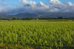 Традиционная сельская местность и ландшафты красивой Тосканы Виноградники в Италии Виноградники Тосканы, винодельческого региона  стоковые фотографии rf
