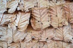 Традиционная стена листьев Стоковое Изображение