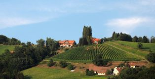 Традиционный виноградник в более низкой Штирии стоковое фото