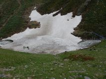 Традиционный марш овец табунит над перевалом к выгону Стоковая Фотография
