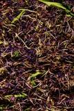 Традиционный русский зеленый травяной чай от Fireweed выходит: Чай чая Koporye, русских или Иван Chai Стоковые Изображения RF
