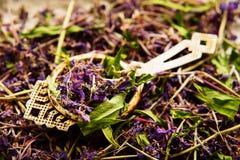 Традиционный русский зеленый травяной чай от Fireweed выходит: Чай чая Koporye, русских или Иван Chai Стоковая Фотография