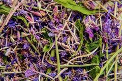 Традиционный русский зеленый травяной чай от Fireweed выходит: Чай чая Koporye, русских или Иван Chai Стоковые Изображения