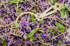Традиционный русский зеленый травяной чай от Fireweed выходит: Чай чая Koporye, русских или Иван Chai Стоковое Изображение