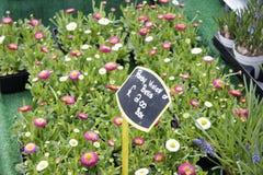 Традиционный рынок цветка в Йорке Стоковые Изображения RF