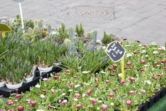 Традиционный рынок цветка в Йорке Стоковое фото RF
