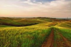 Трактор выравнивается в зеленом поле в Тоскане Стоковые Фотографии RF