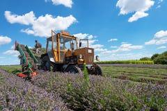 Трактор жать поле стоковое изображение rf