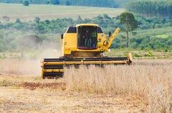 Трактор жать плантацию сои стоковая фотография rf